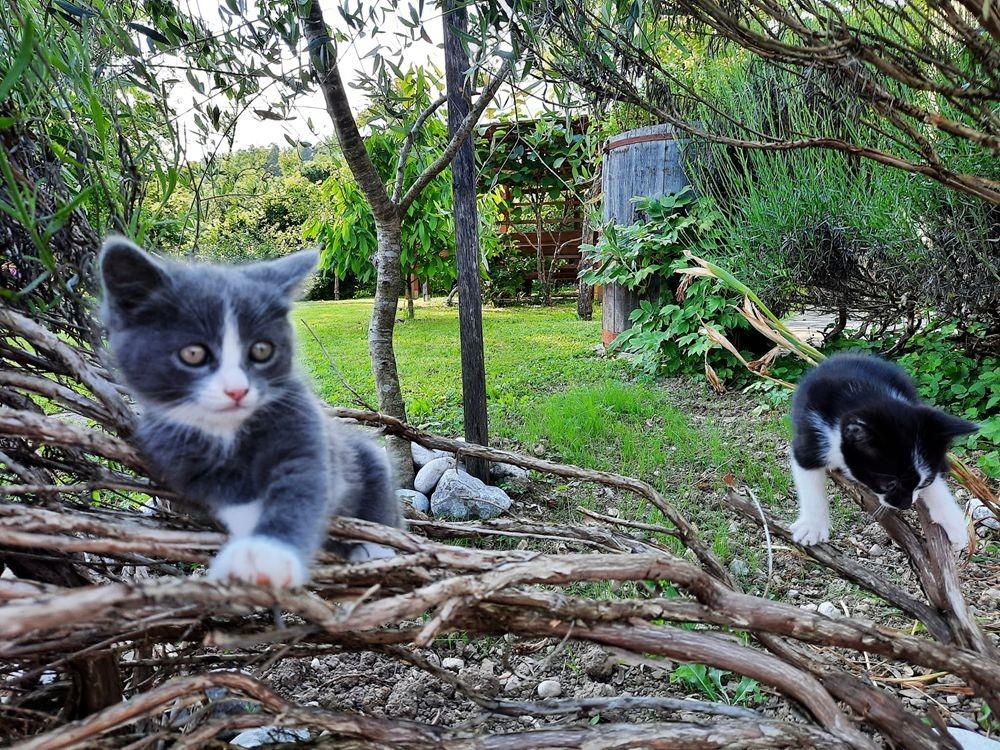 珍妮丝花园与她的宝贝猫_图1-26