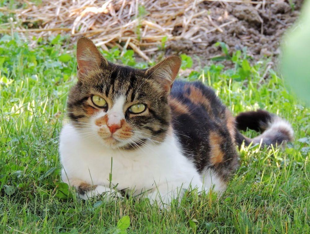 珍妮丝花园与她的宝贝猫_图1-30