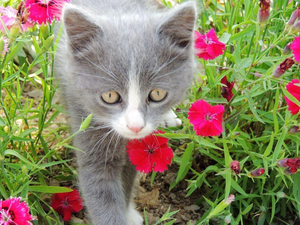 珍妮丝花园与她的宝贝猫_图1-27