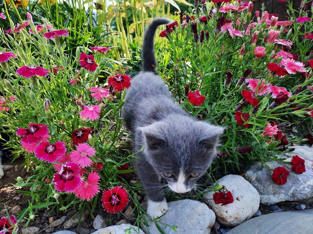 珍妮丝花园与她的宝贝猫_图1-29
