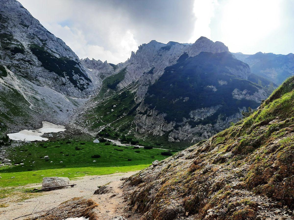 Pokljuka高原山上的野花_图1-2
