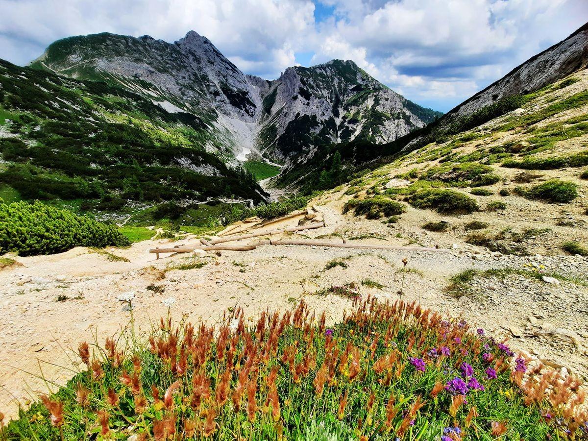 Pokljuka高原山上的野花_图1-6