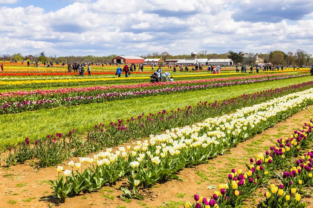 荷兰岭农场(Holland Ridge Farms, NJ),五彩花带_图1-1