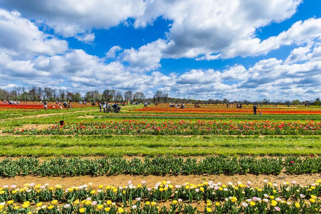 荷兰岭农场(Holland Ridge Farms, NJ),五彩花带_图1-6
