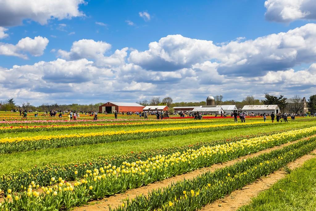 荷兰岭农场(Holland Ridge Farms, NJ),五彩花带_图1-3