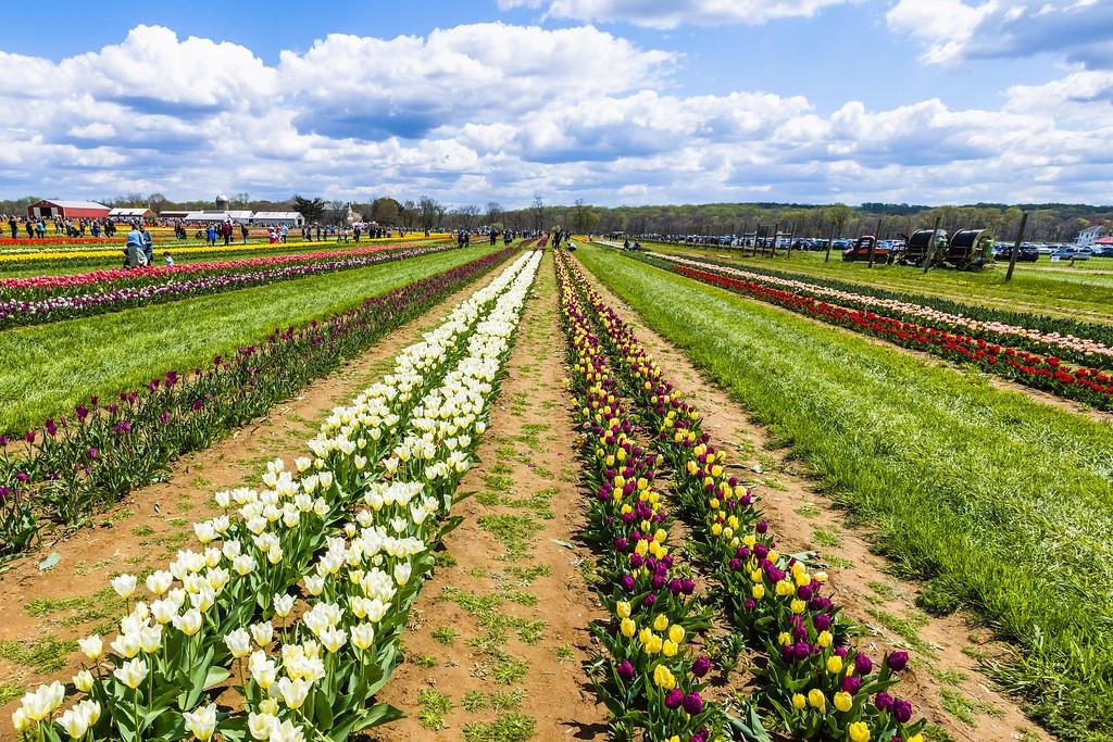 荷兰岭农场(Holland Ridge Farms, NJ),五彩花带_图1-4