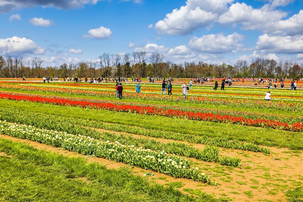 荷兰岭农场(Holland Ridge Farms, NJ),五彩花带_图1-7
