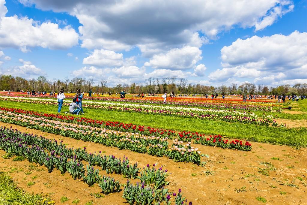 荷兰岭农场(Holland Ridge Farms, NJ),五彩花带_图1-9