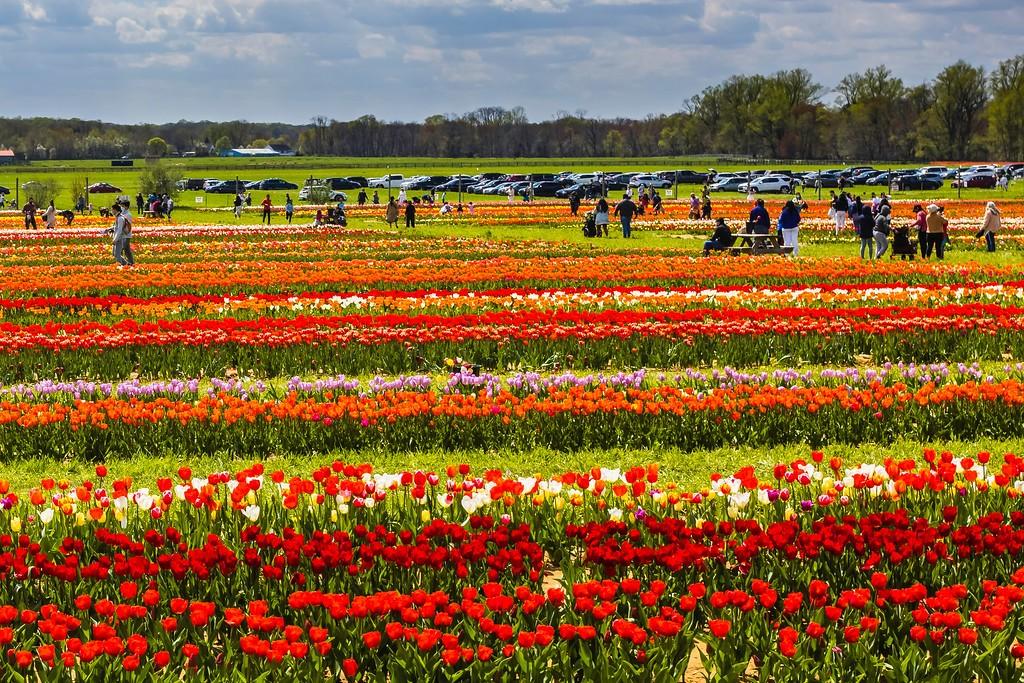 荷兰岭农场(Holland Ridge Farms, NJ),五彩花带_图1-11