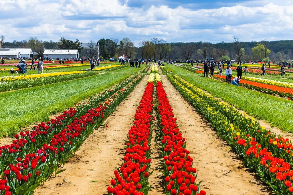 荷兰岭农场(Holland Ridge Farms, NJ),五彩花带_图1-5