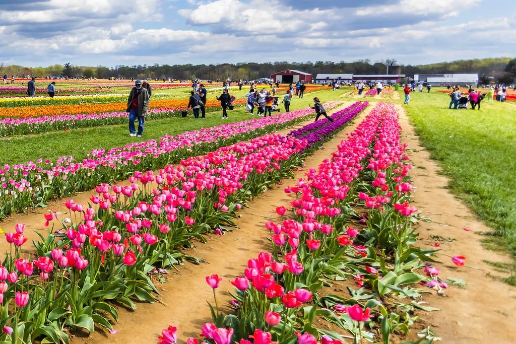 荷兰岭农场(Holland Ridge Farms, NJ),五彩花带_图1-8