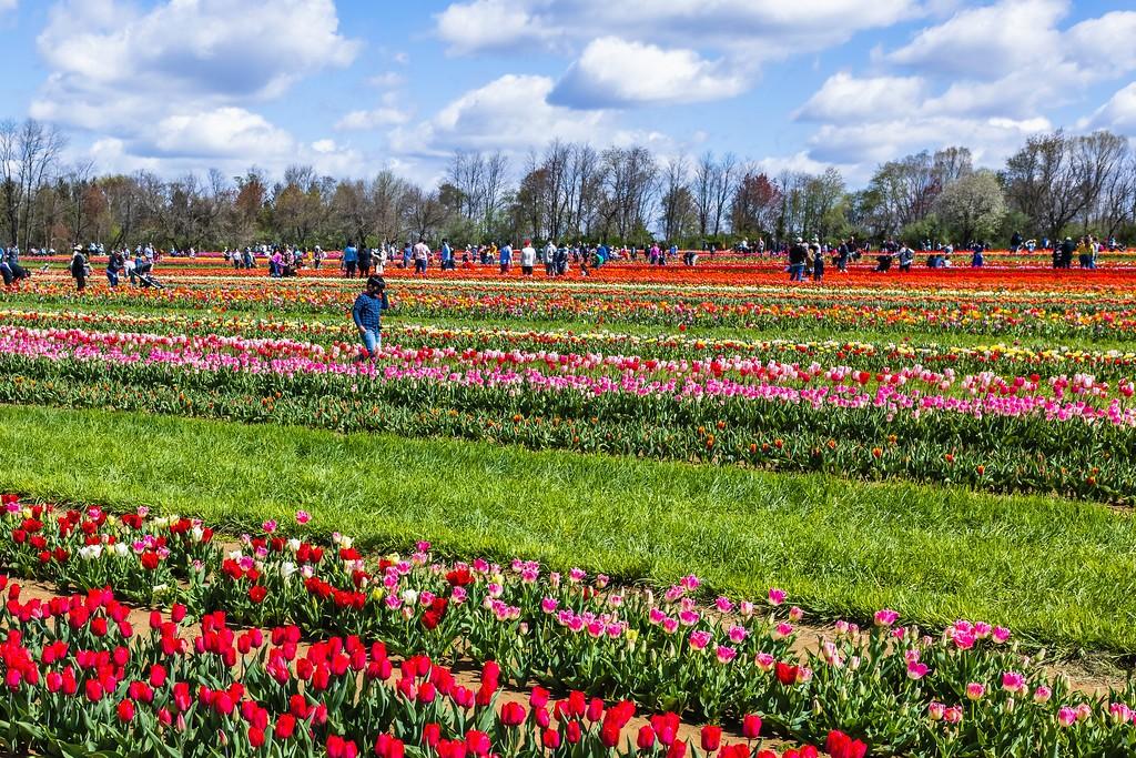 荷兰岭农场(Holland Ridge Farms, NJ),五彩花带_图1-2