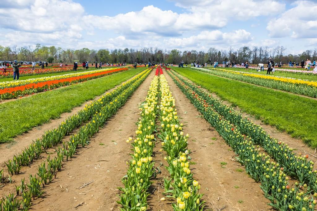 荷兰岭农场(Holland Ridge Farms, NJ),五彩花带_图1-12