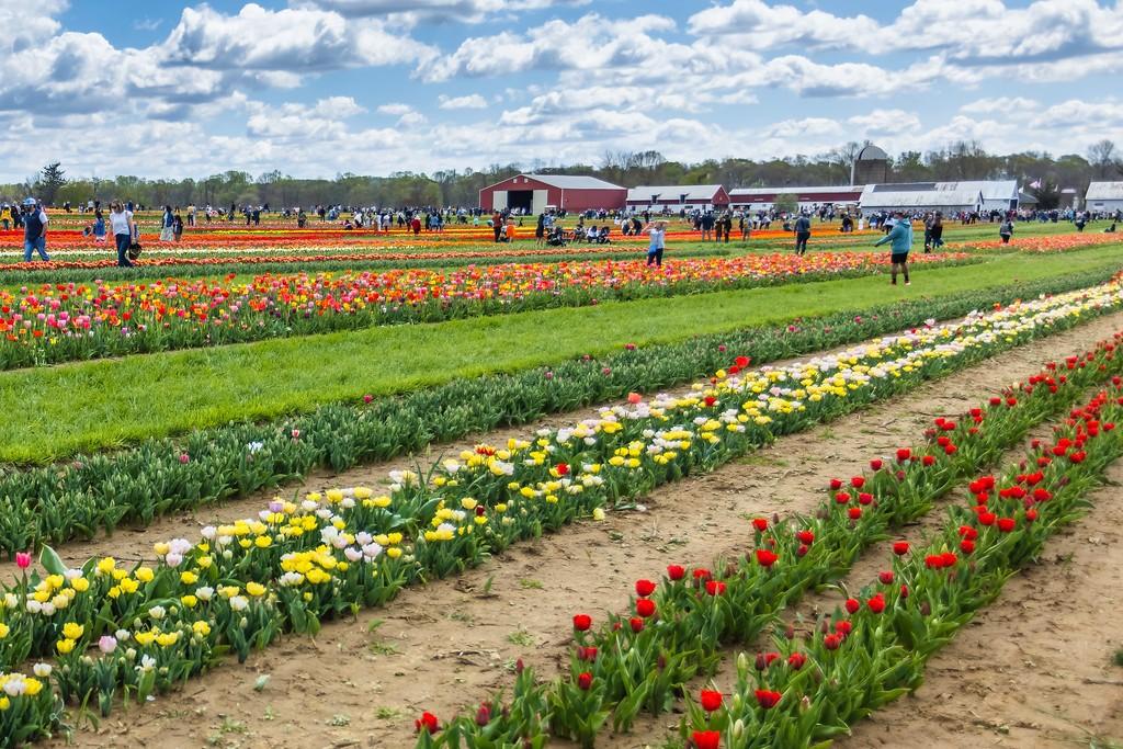 荷兰岭农场(Holland Ridge Farms, NJ),五彩花带_图1-10