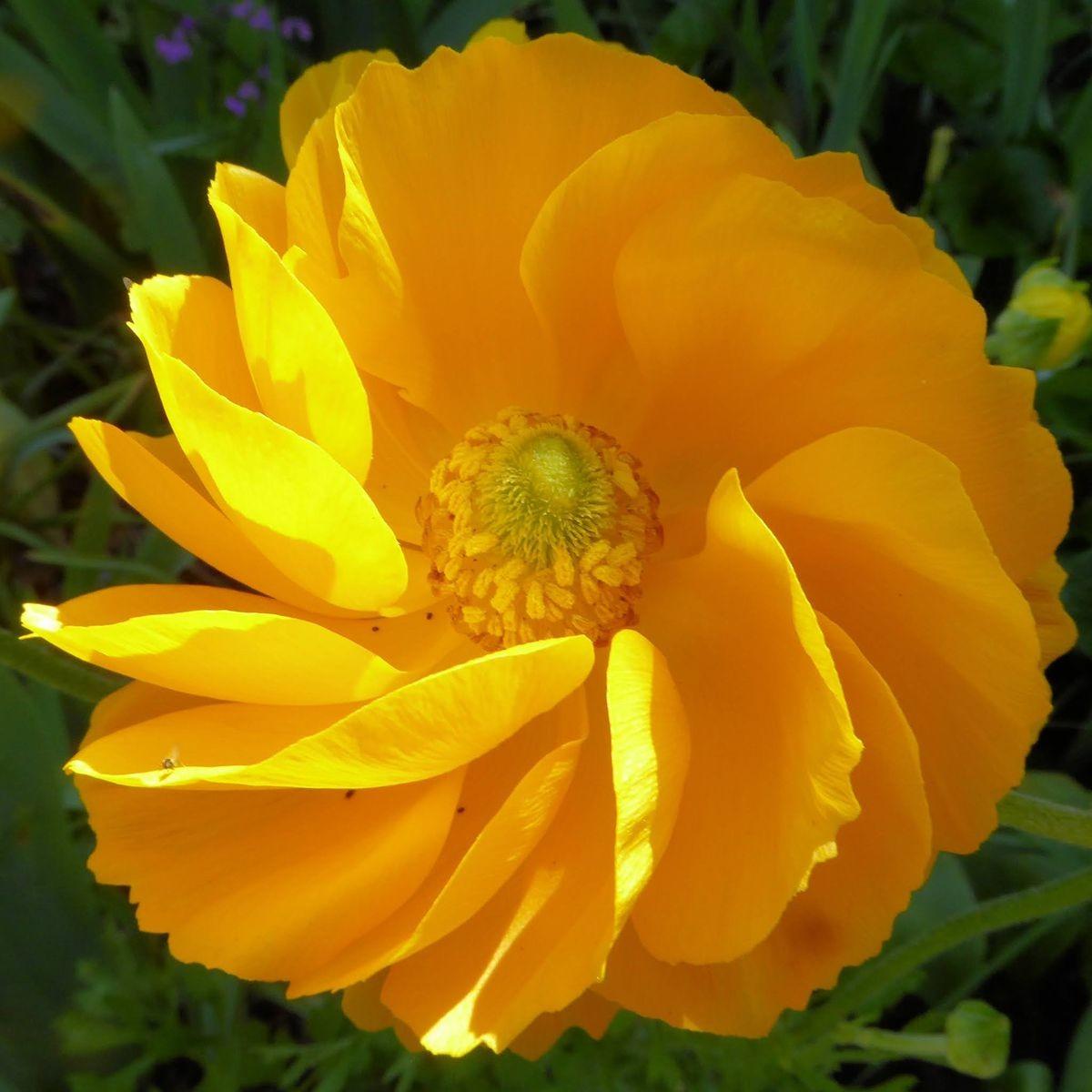 参观玛丽特的花园_图1-11