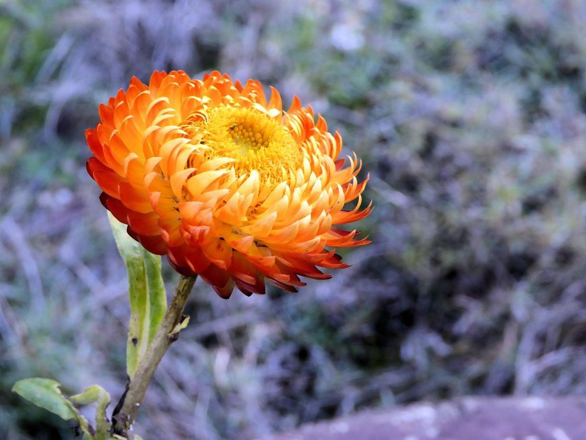 参观玛丽特的花园-2_图1-8