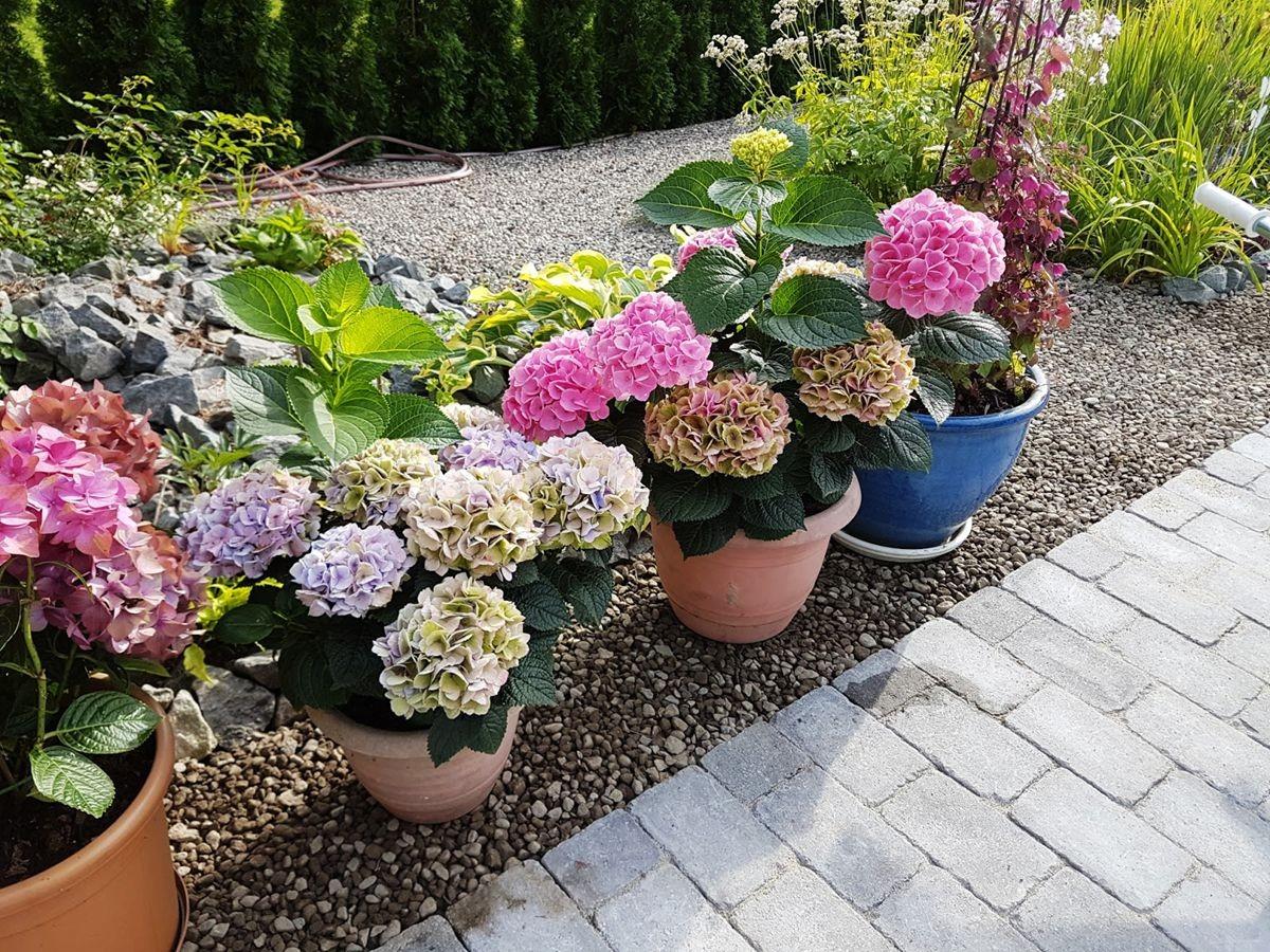 参观玛丽特的花园-2_图1-9