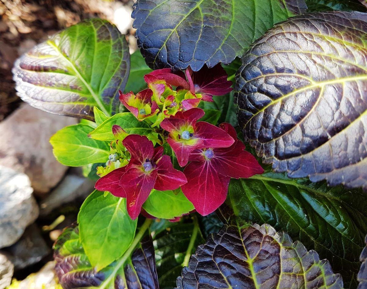 参观玛丽特的花园-2_图1-11