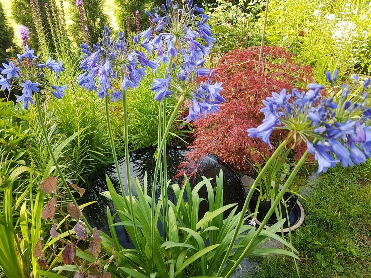 参观玛丽特的花园-2_图1-16