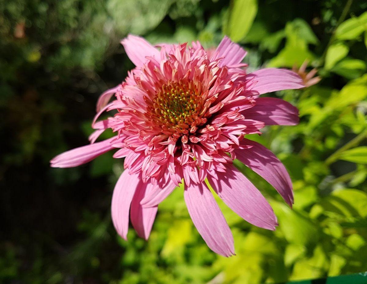 参观玛丽特的花园-2_图1-17