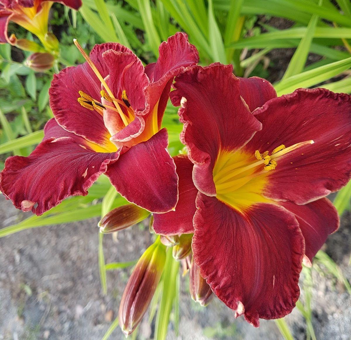 参观玛丽特的花园-2_图1-24
