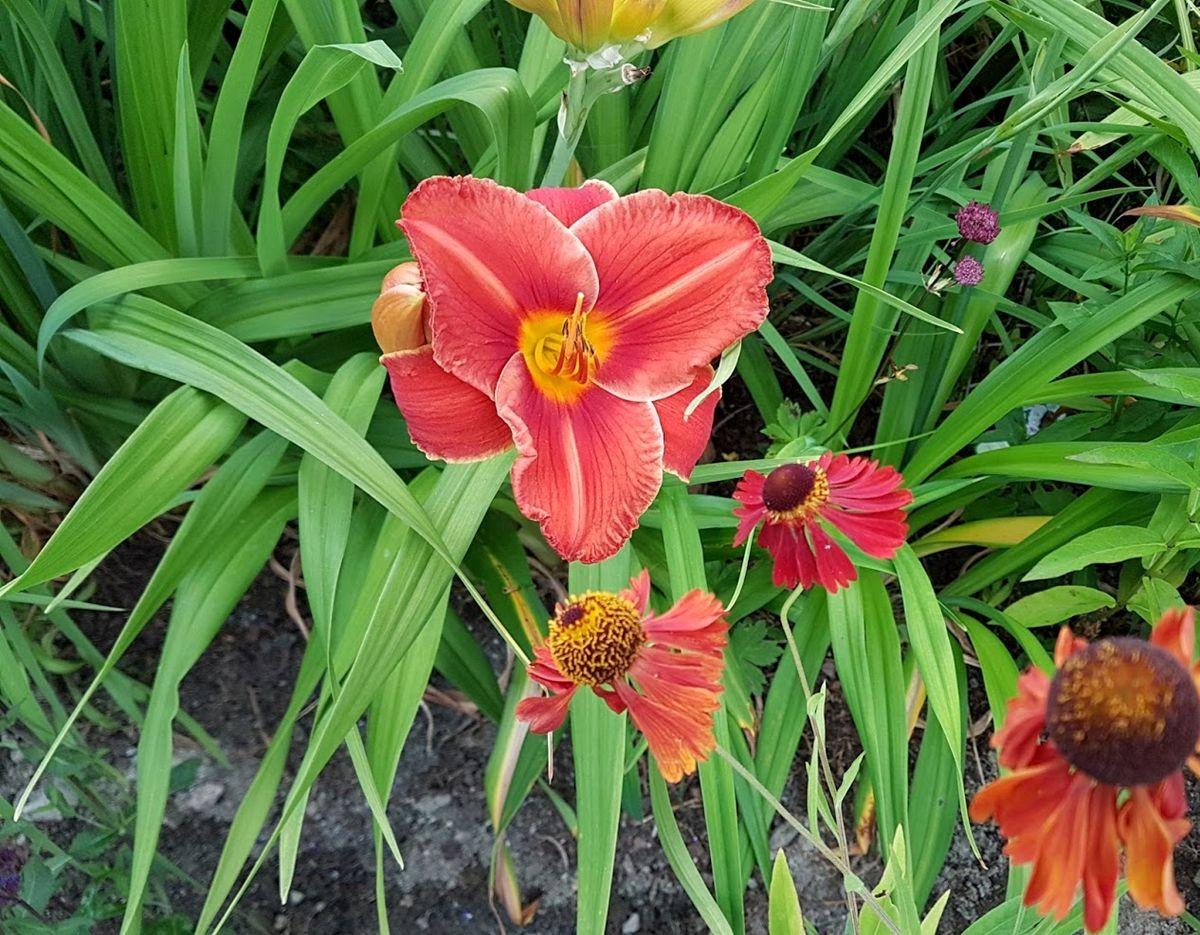 参观玛丽特的花园-2_图1-25