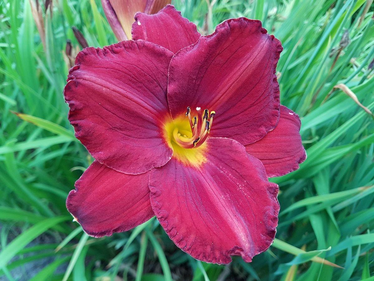 参观玛丽特的花园-2_图1-27