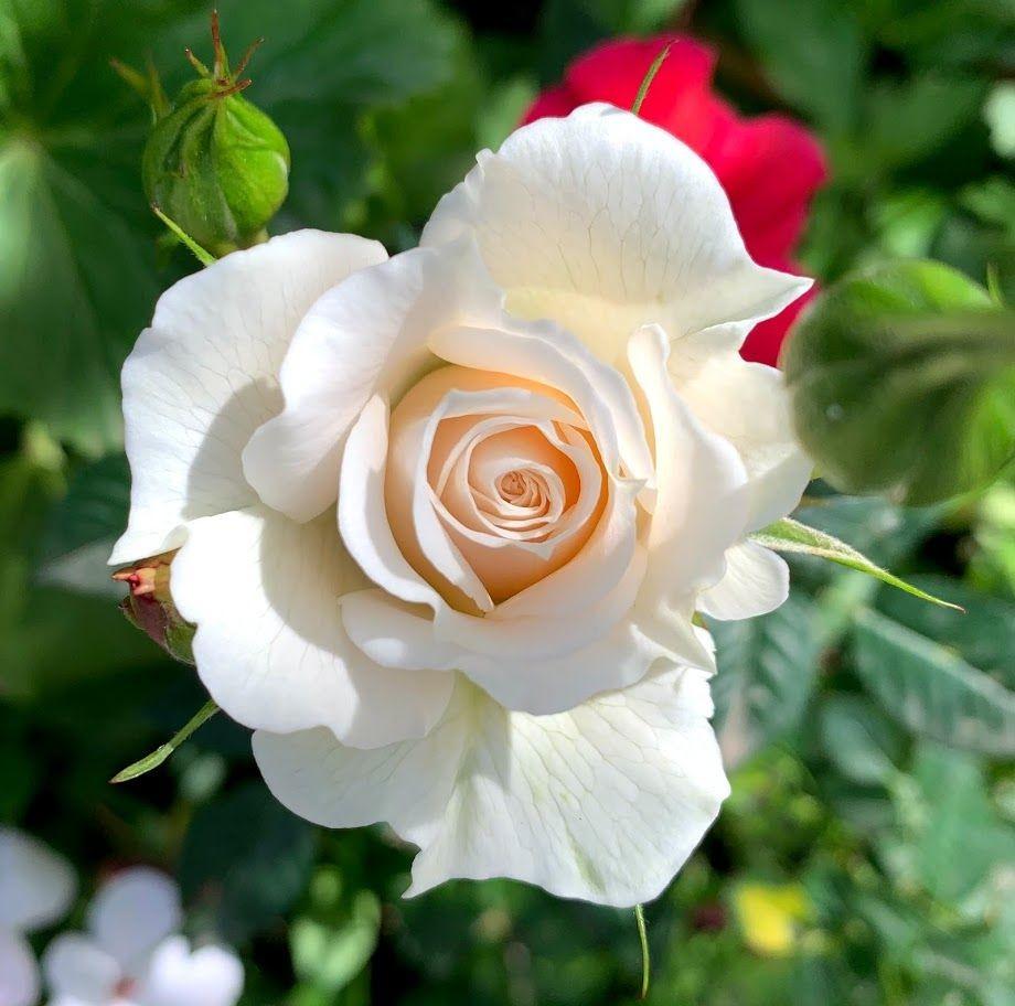 花卉日记-98_图1-6