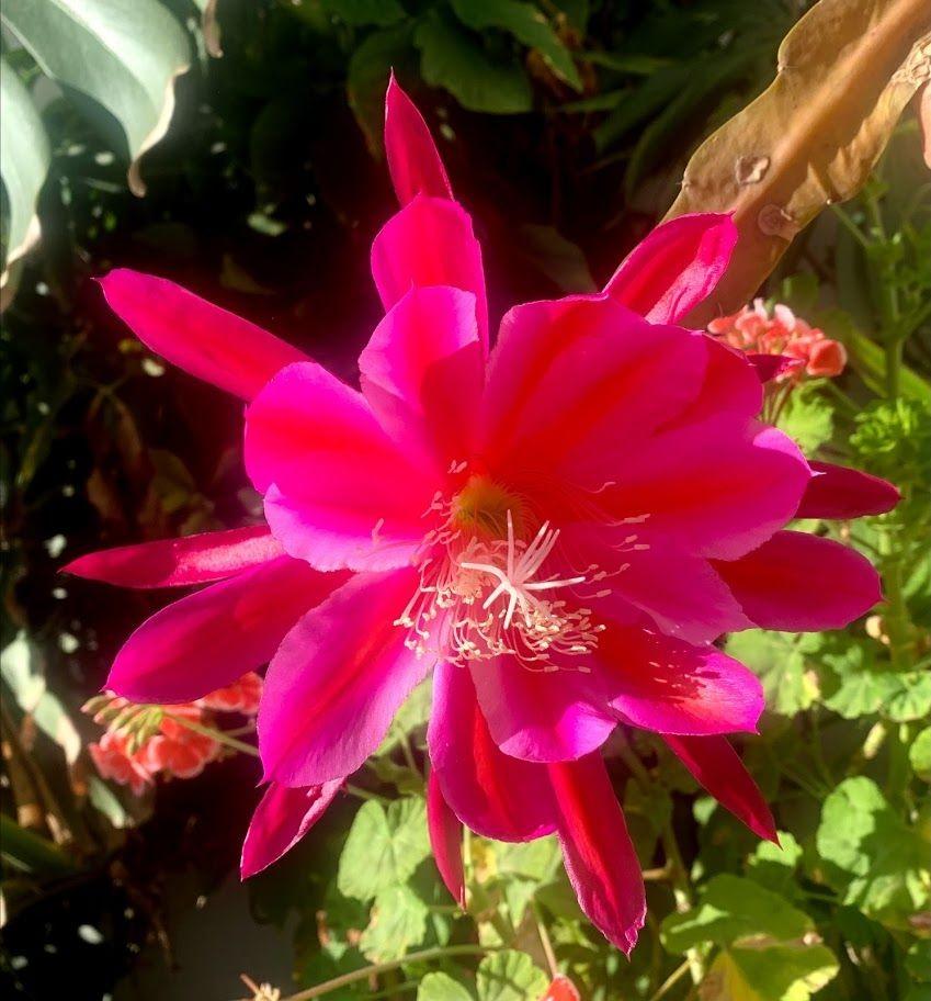 花卉日记-98_图1-12