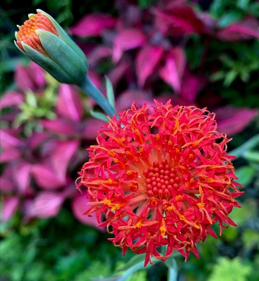 花卉日记-98_图1-16