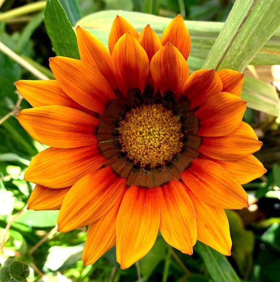 花卉日记-98_图1-17