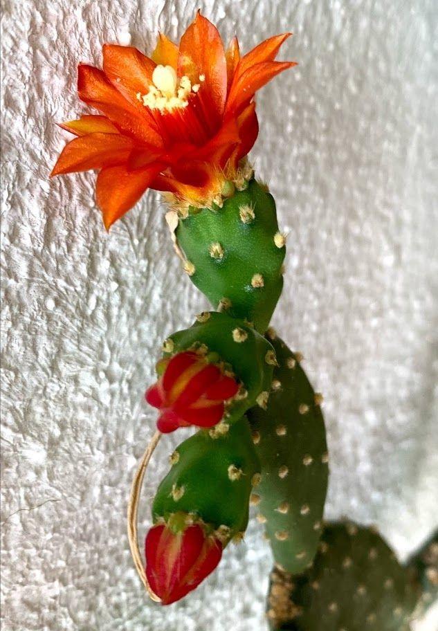 花卉日记-98_图1-20