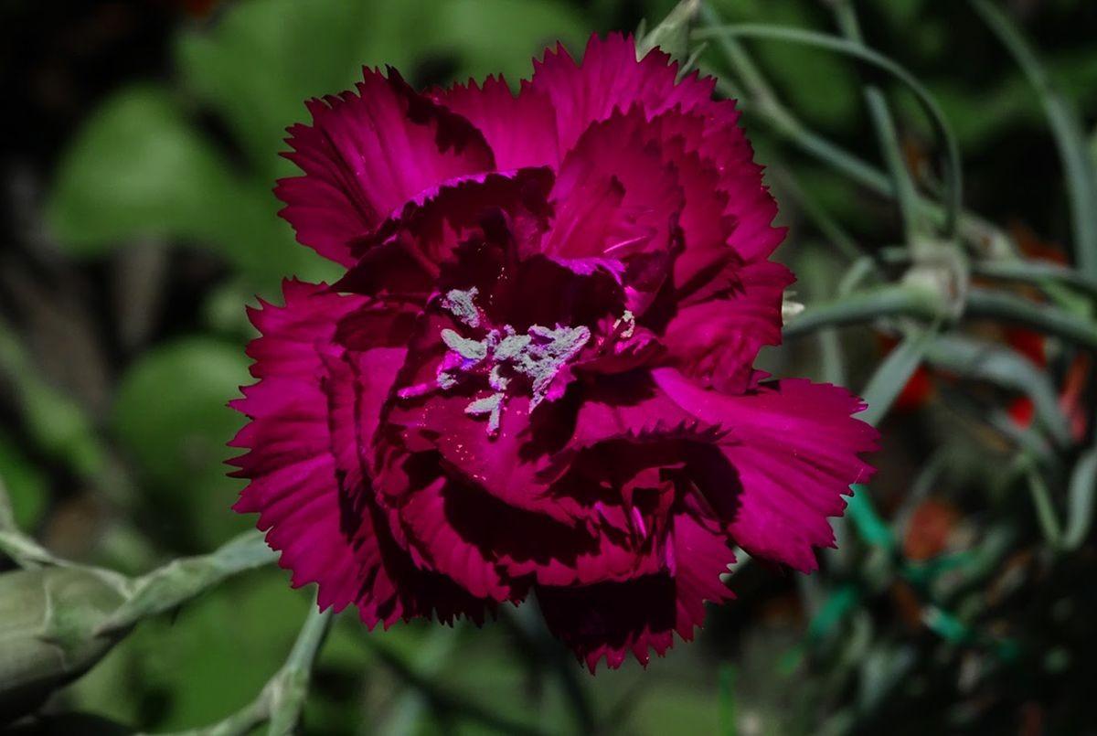花卉日记-99_图1-5