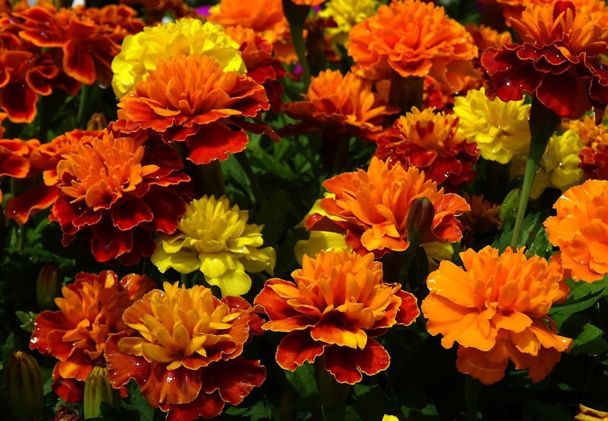 花卉日记-99_图1-9