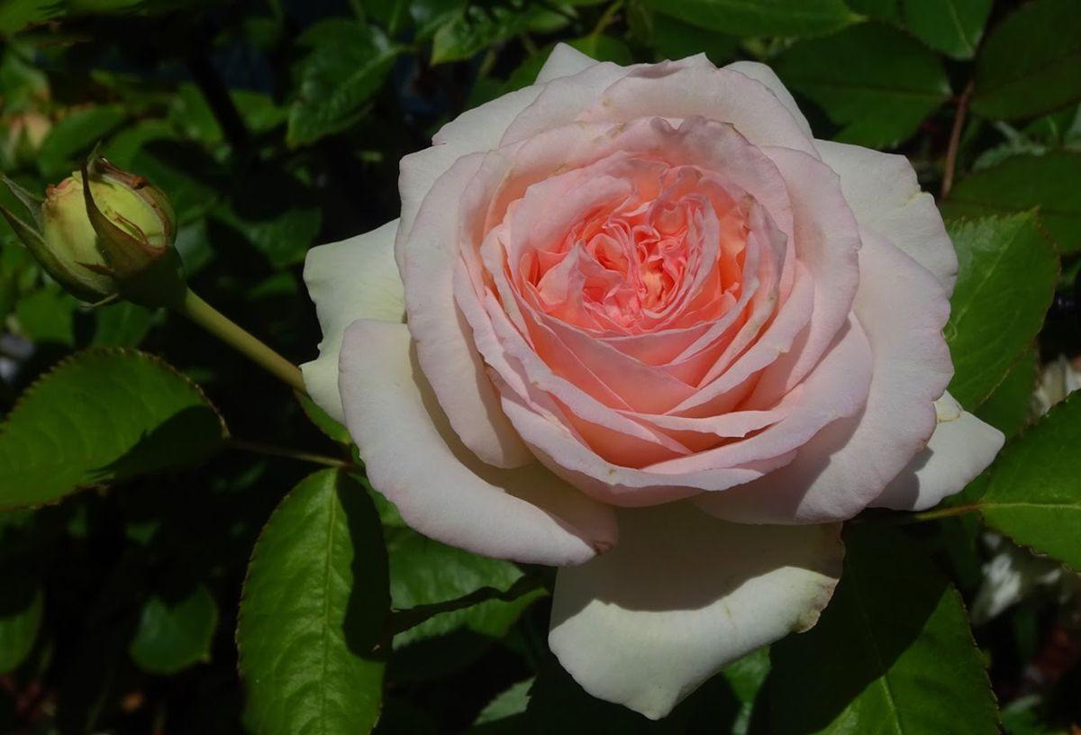 花卉日记-99_图1-10