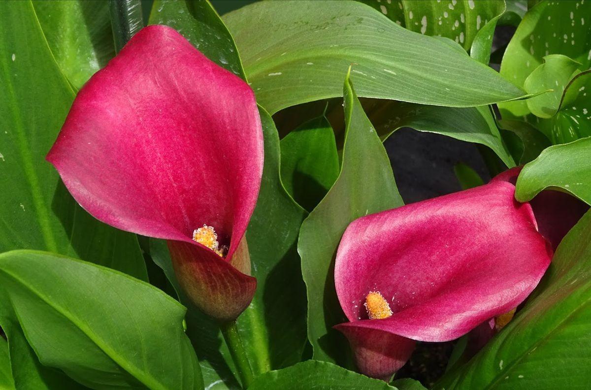 花卉日记-99_图1-11