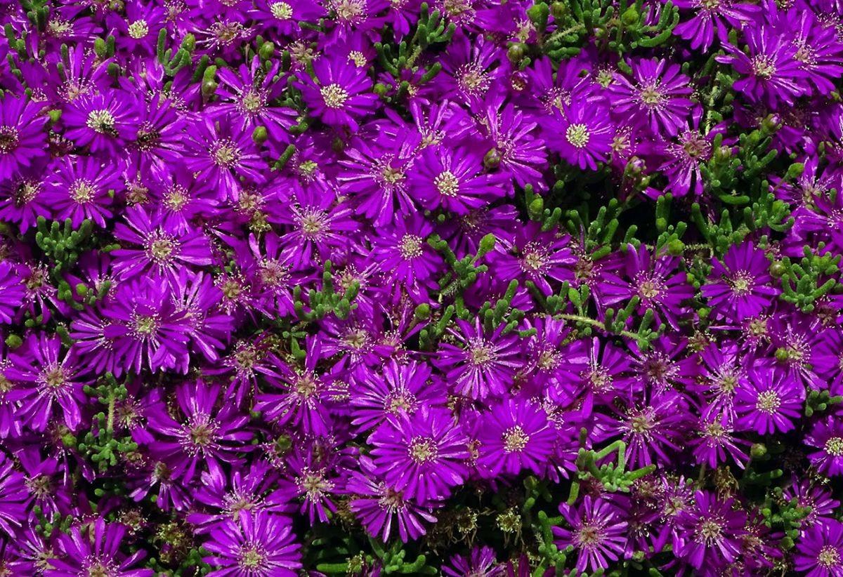 花卉日记-99_图1-15
