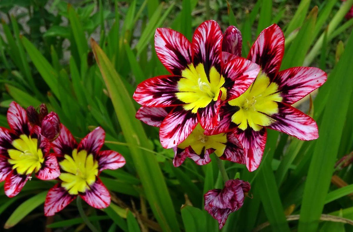 花卉日记-99_图1-16