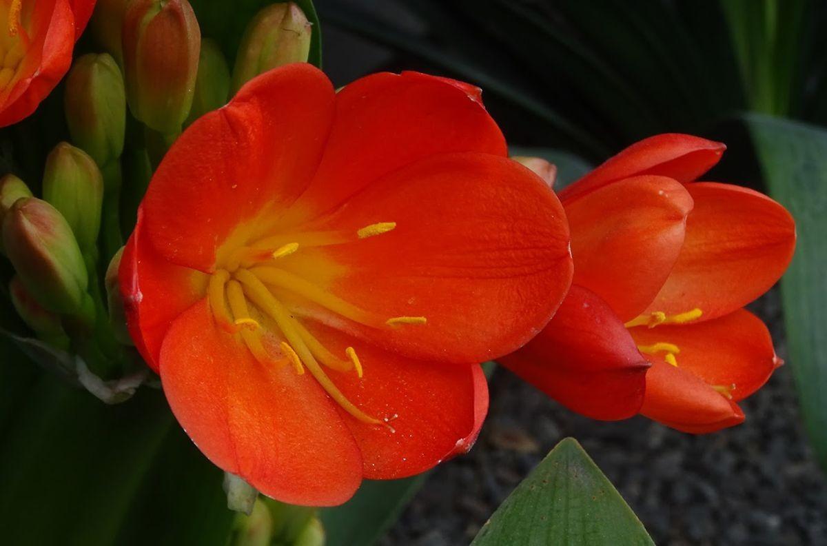 花卉日记-99_图1-18