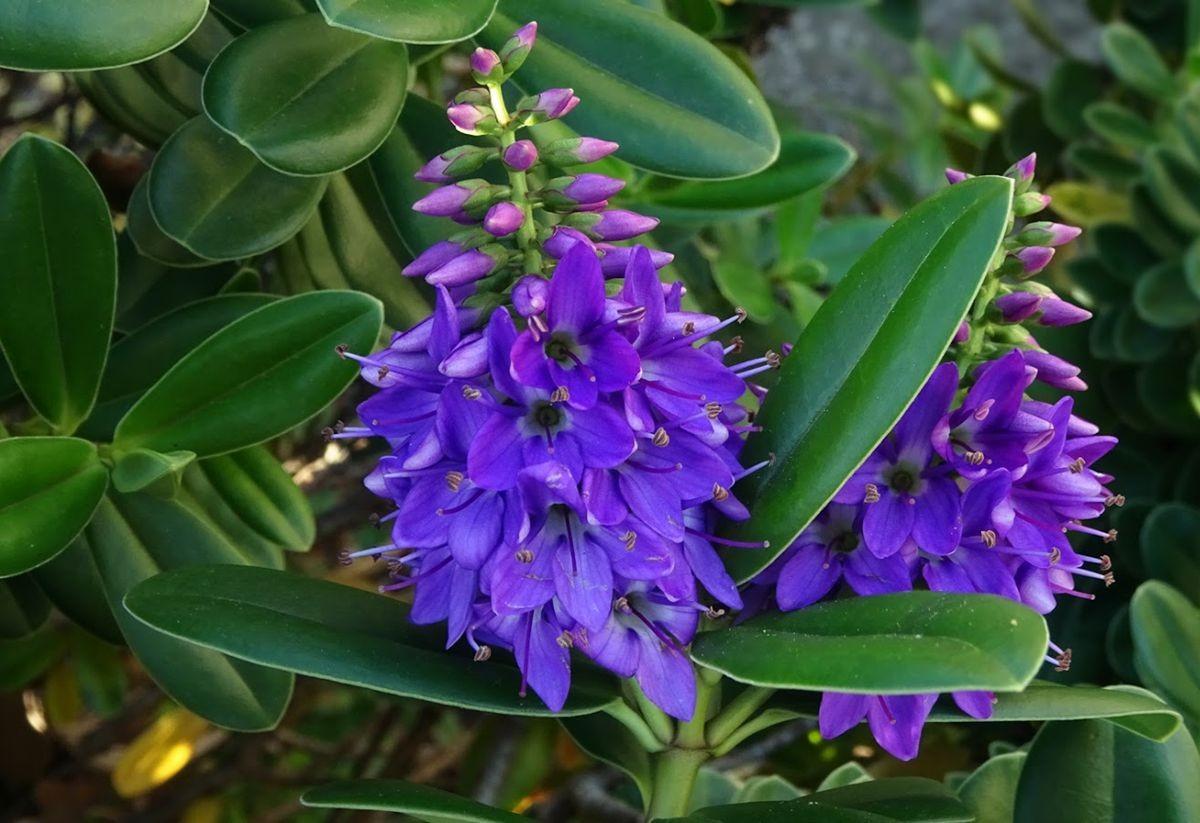 花卉日记-99_图1-19