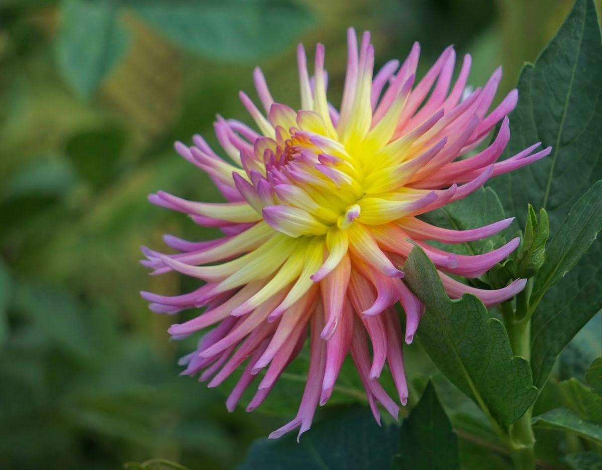 花卉日记-99_图1-21