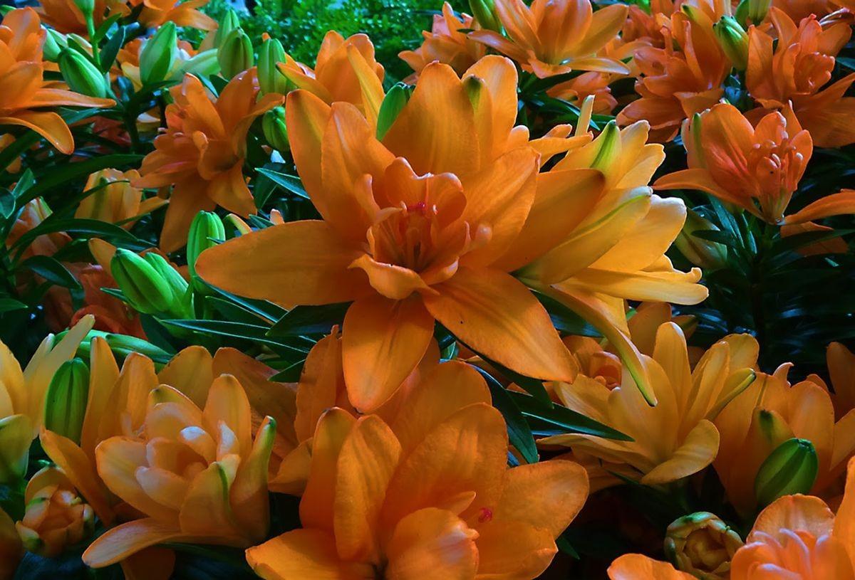 花卉日记-99_图1-23