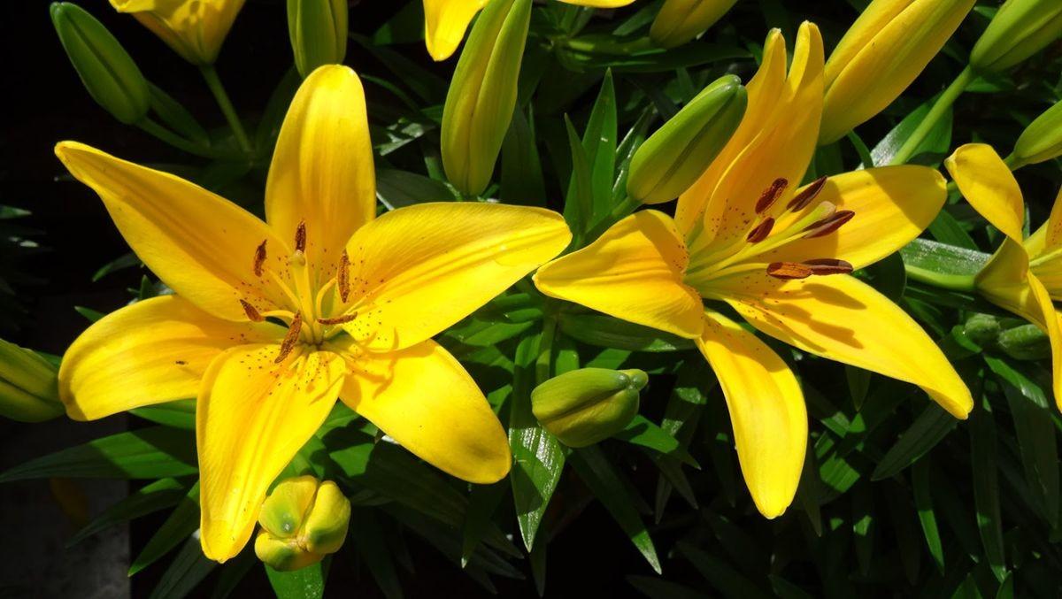 花卉日记-99_图1-24