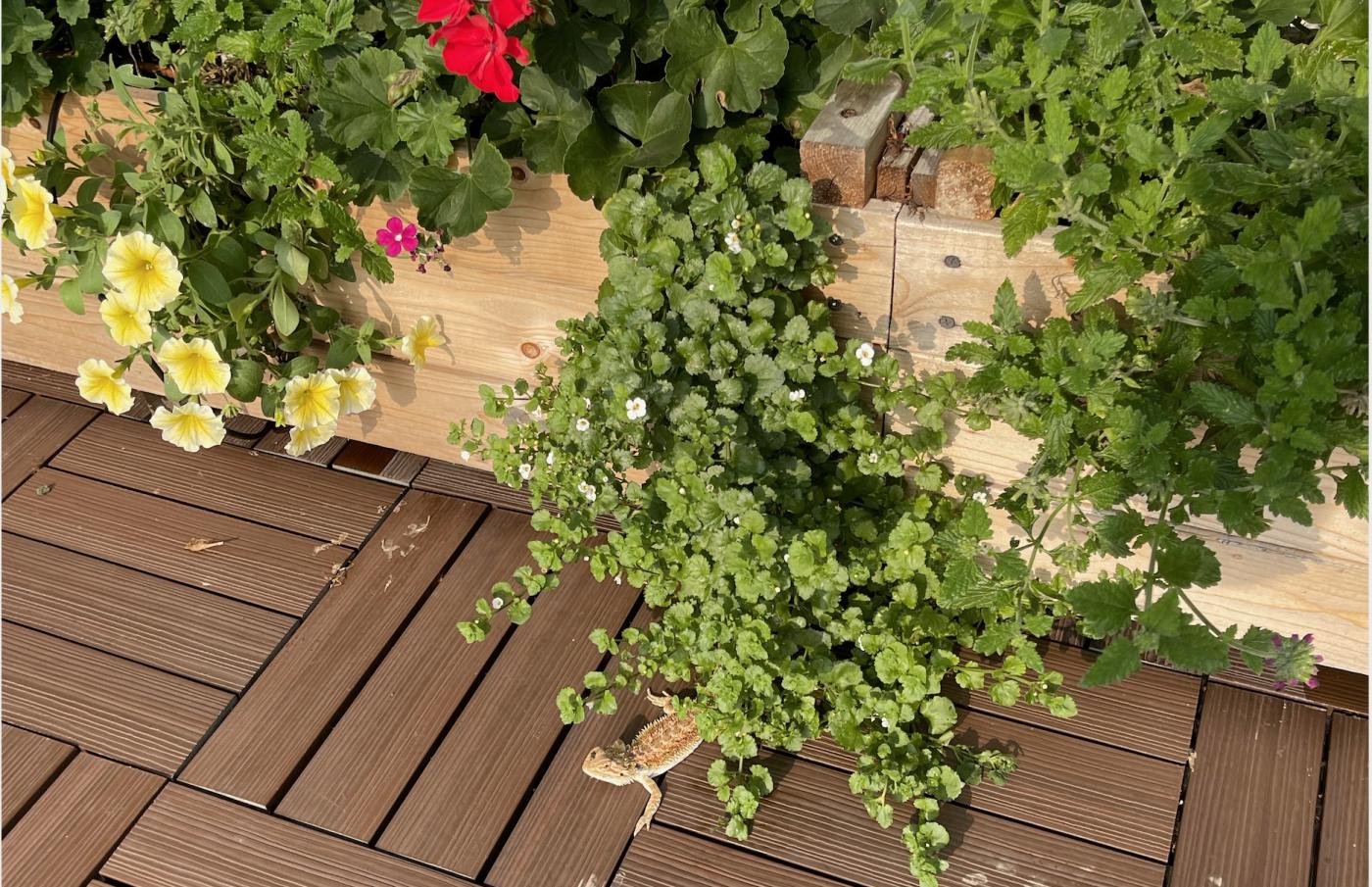 野花、家花、乐高花、苹果干、小龙_图1-23