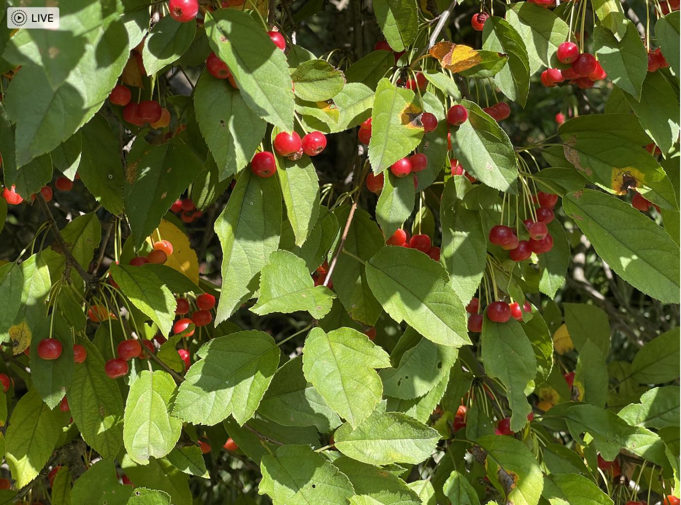 野花、家花、乐高花、苹果干、小龙_图1-8