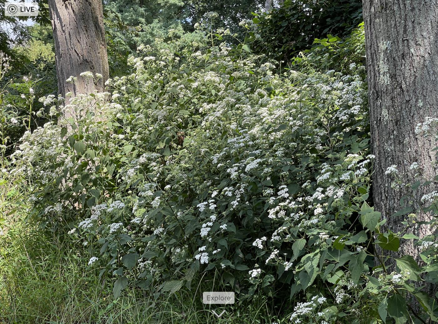 野花、家花、乐高花、苹果干、小龙_图1-4