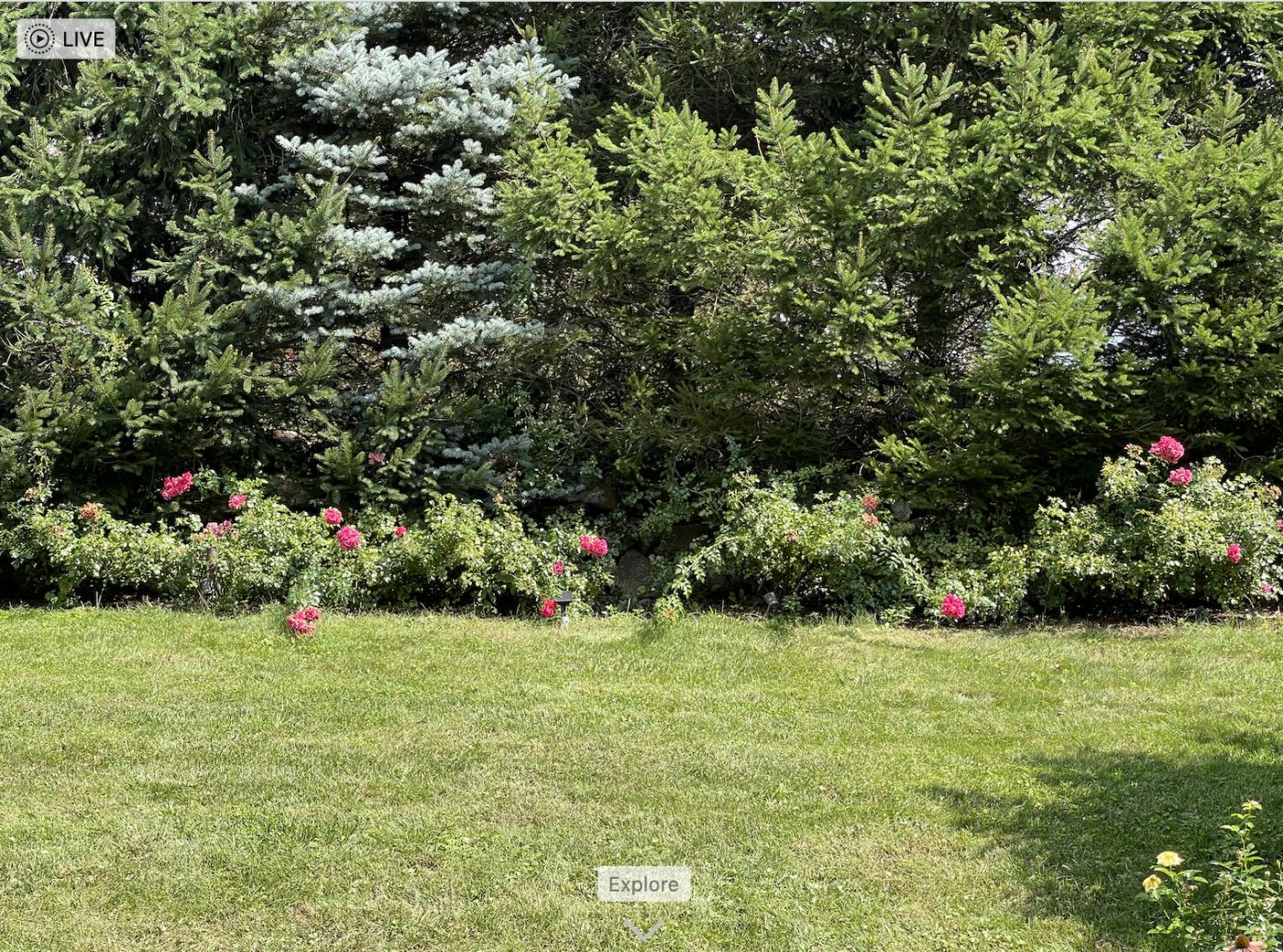 野花、家花、乐高花、苹果干、小龙_图1-12