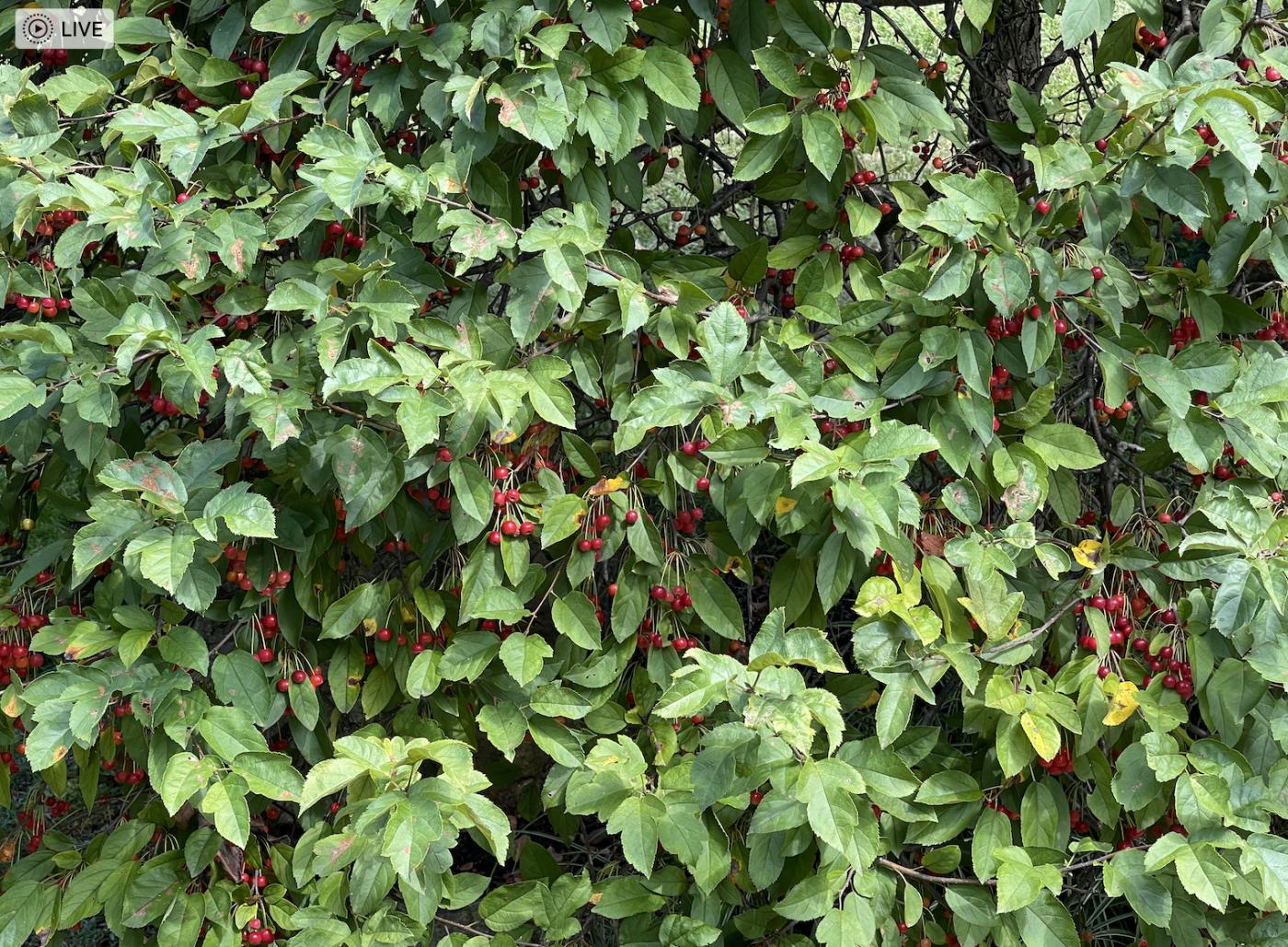 野花、家花、乐高花、苹果干、小龙_图1-9
