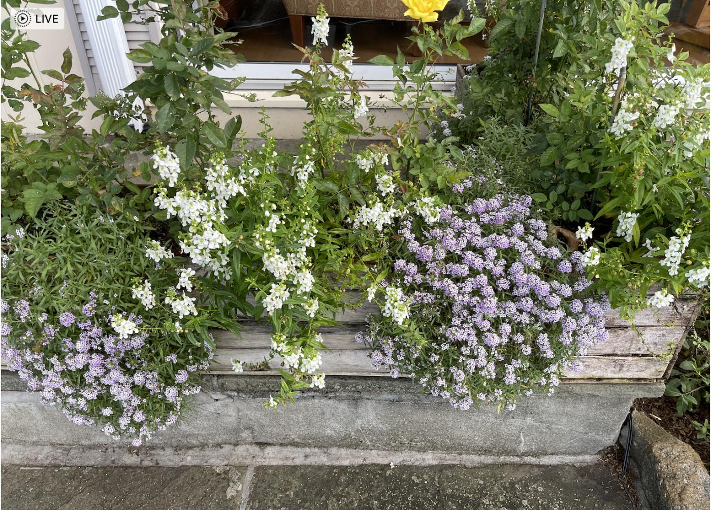 野花、家花、乐高花、苹果干、小龙_图1-11