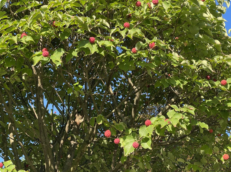 野花、家花、乐高花、苹果干、小龙_图1-10